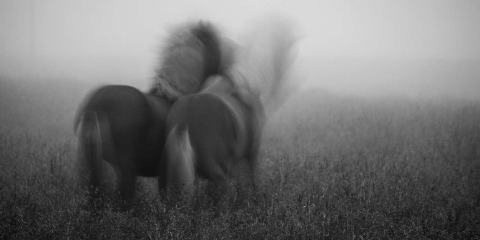 Story of Two Horses #4