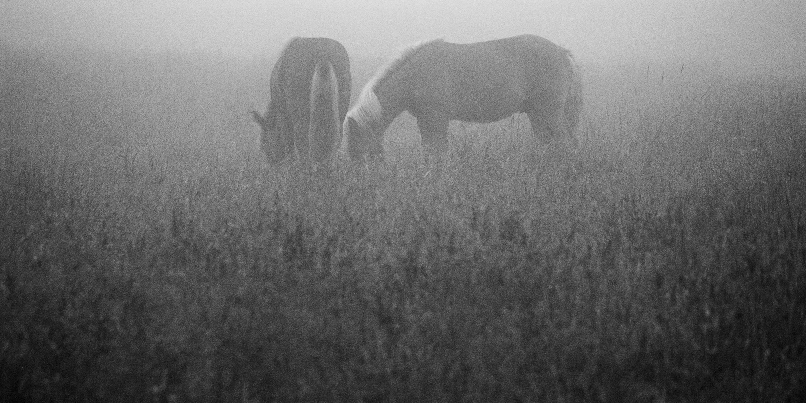 Story of Two Horses #5