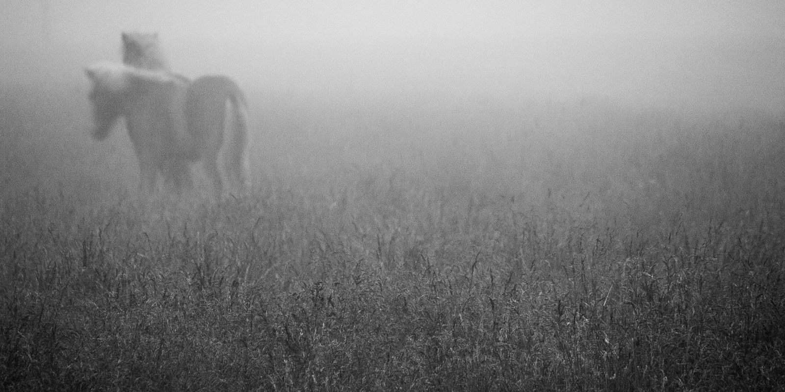 Story of Two Horses #6